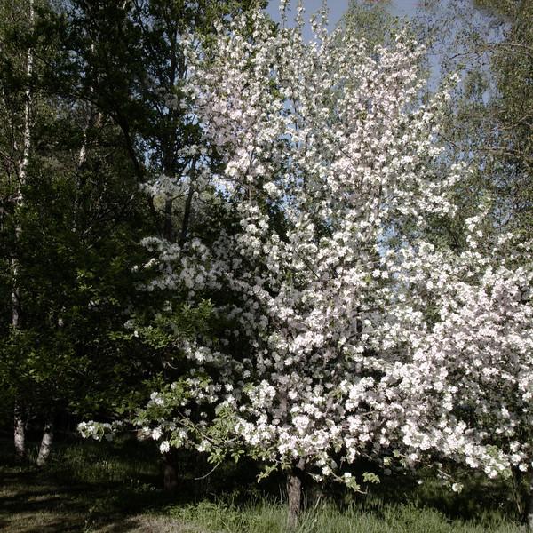 Dag_046_2012-maj-27_6736a.jpg