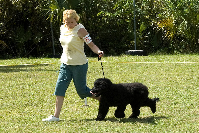 The Portugese Water Dog competed in the Working Group in Conformation.