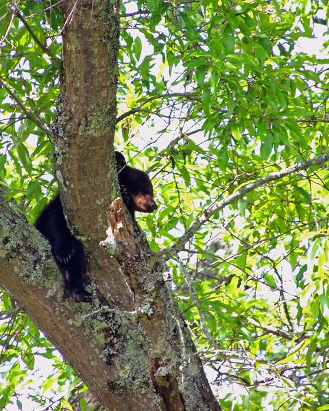 bear cub 01.jpg