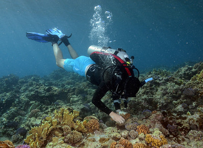 SECORE coral outplanting at Tanguisson - 7/31/13