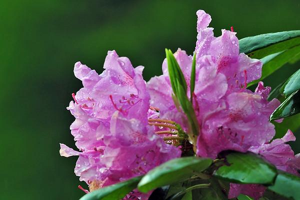 Flowers - West Virginia