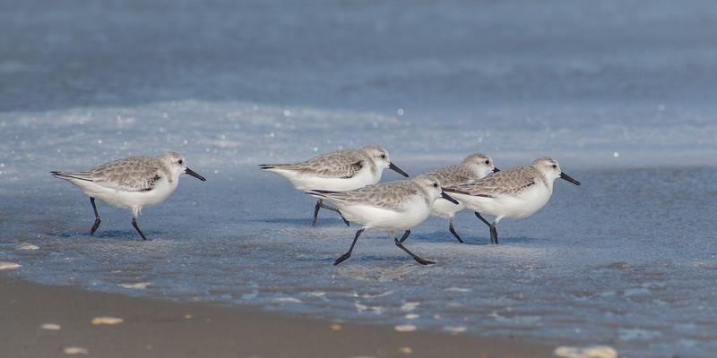 birds 8831 10x20-2.jpg