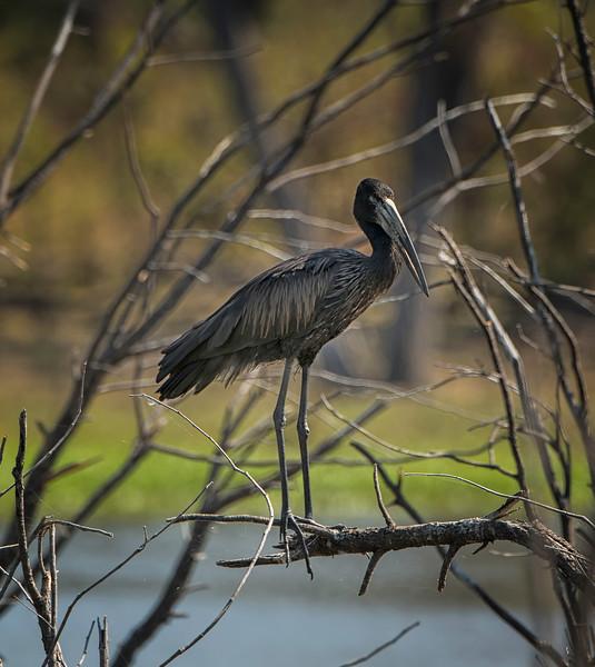 2014-08Aug-Okavango Masters-65-Edit.jpg