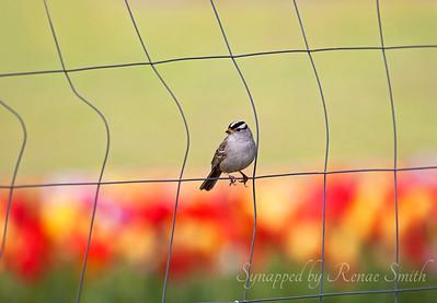 Birds-Various