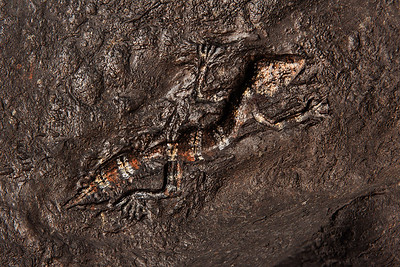 lizard fossil artwork