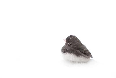 PA-Montco-Wildlife-Birds
