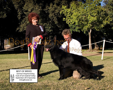German Shepherd Dog Club of San Gabriel Vally - September 2013