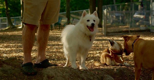 PICS JUNE 13::BOBO, FOXI