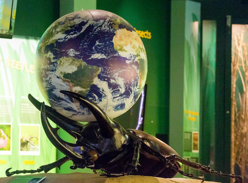 Image of a beetle as Atlas, bearing the Earth