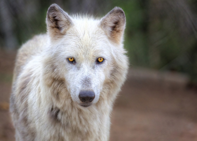 Mission:Wolf