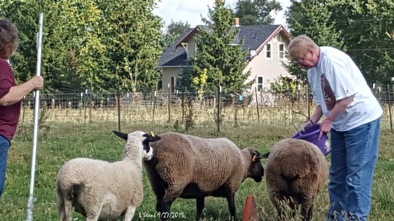 2015.9.27 Herding at Bonnies (13).jpg