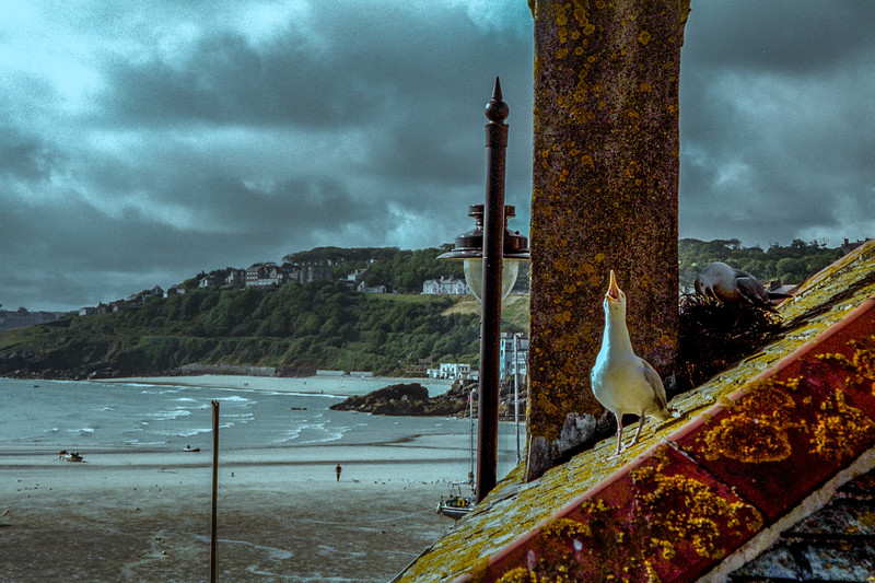 Our neighbours at St. Ives