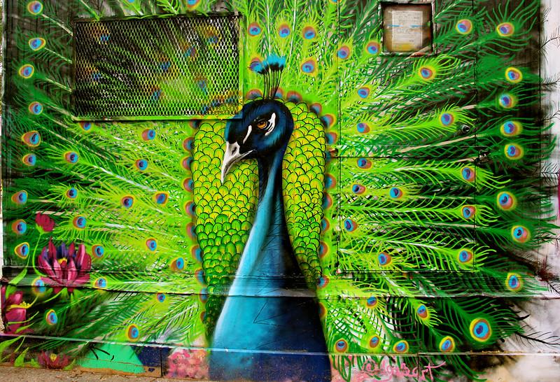 Peacock on trailer.jpg
