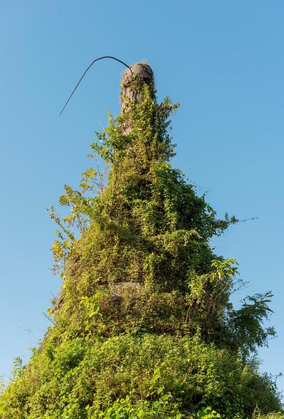 Overgrown stupa, Mrauk U, Myanmar