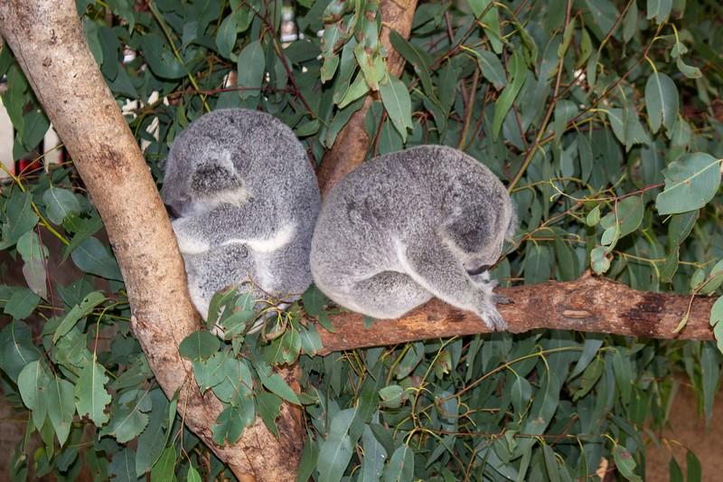 Australia_224.jpg