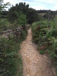 My Camino, The Camino de Santiago