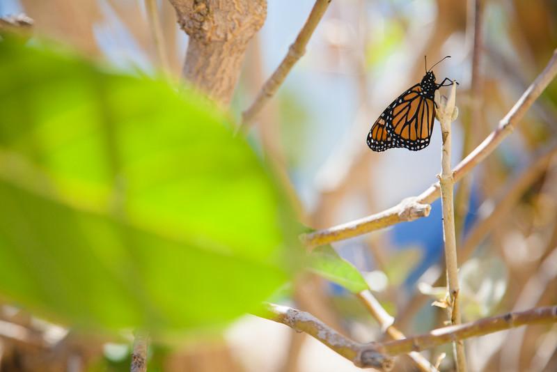 Natura Balboa park-4.jpg
