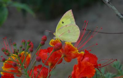 favorite flower shots