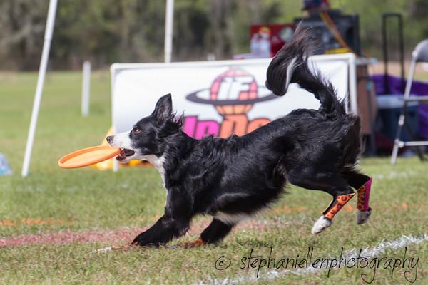 _MG_3158Up_dog_International_2016_StephaniellenPhotography.jpg