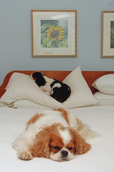 Sleeping on the Big Bed (1).jpg