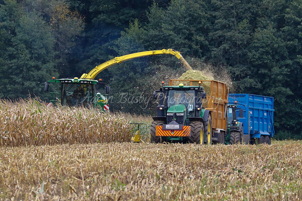Maize Harvesting 03rd September