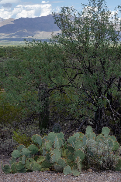 20180902-Saguaro-NP-East-4286.jpg