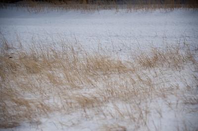 2011/02/04 - Snow in Granbury, Texas
