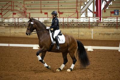 Horse 188