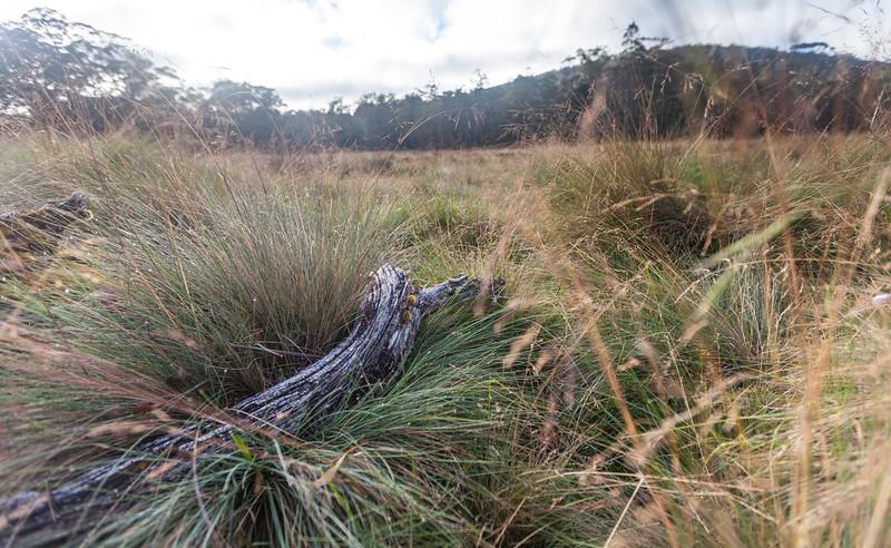 Tasmania_2015_212.jpg