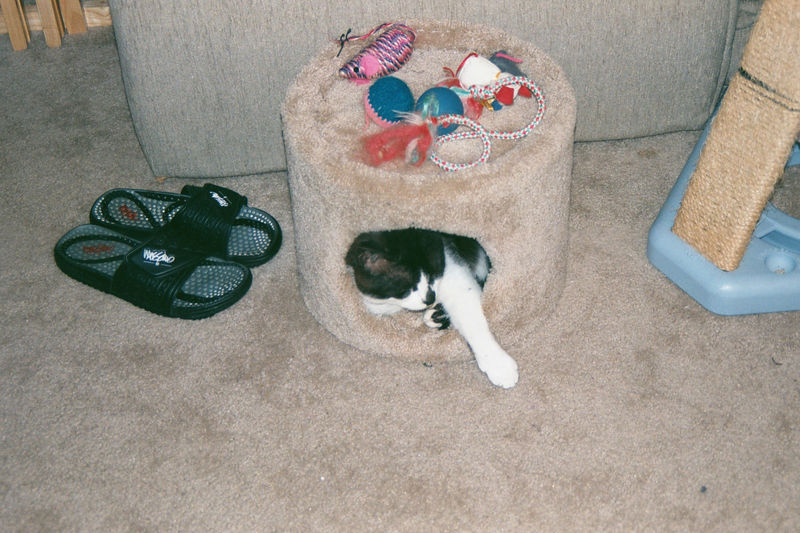 2001 08b - Cats at old apt 29.JPG