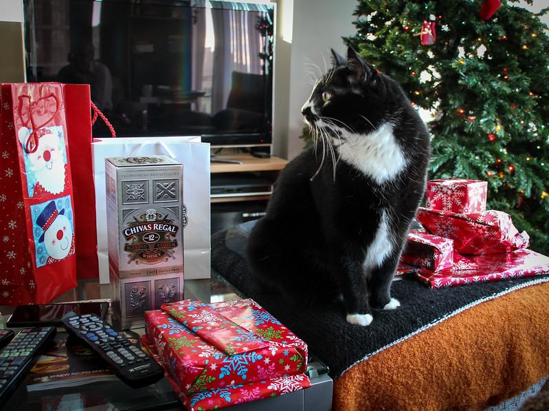 Buddy Christmas (26 of 26).jpg