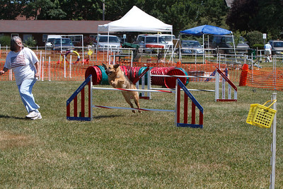 Novice Jumpers With Weaves