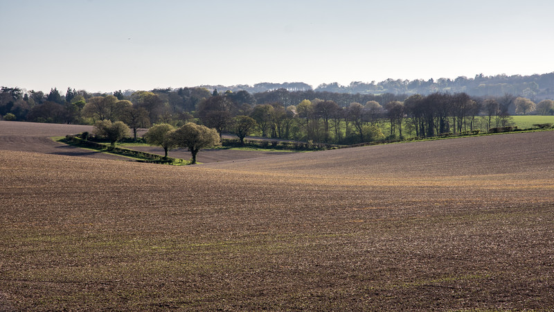 Wendover Woods and Chiltern farmland