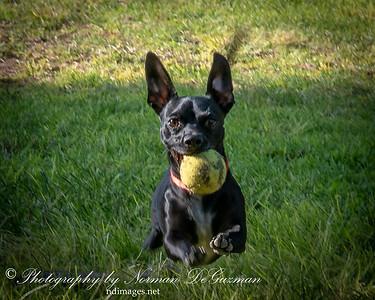 180903 Dog PS at Duncan Dog Park