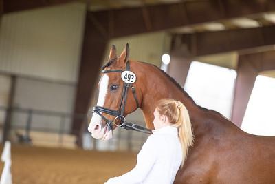 Horse 493