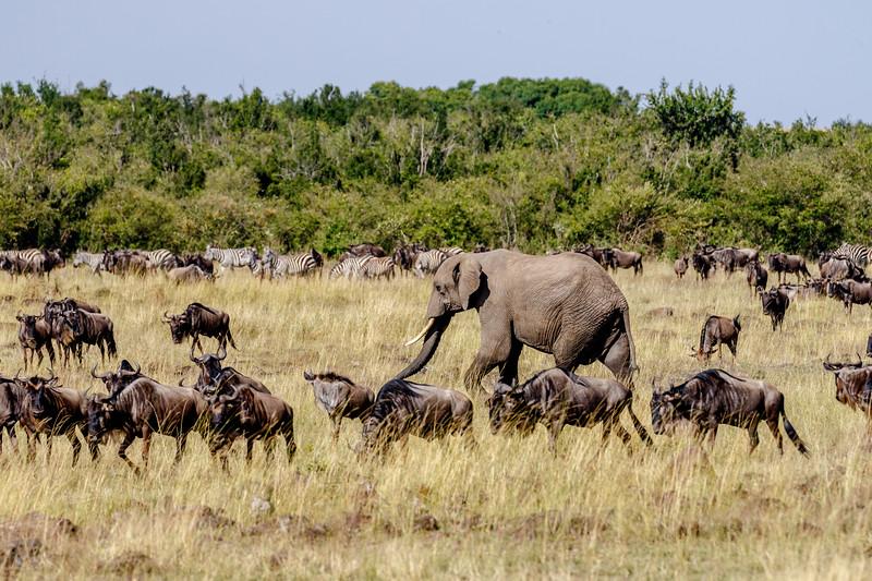 Kenya 2015-03645.jpg