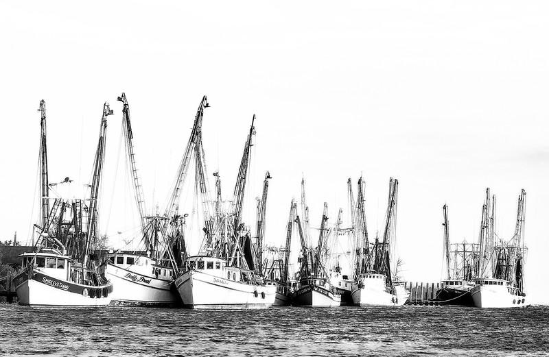 shrimpsfinal-copy.jpg