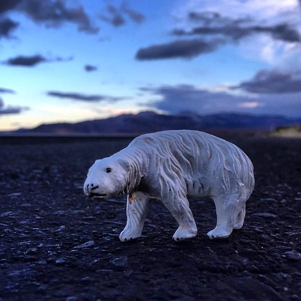 Polar_Bear_jerrybusiness.jpg