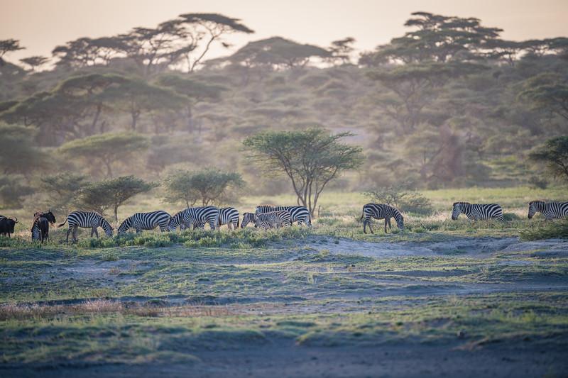 Tanzania_Feb_2018-92.jpg