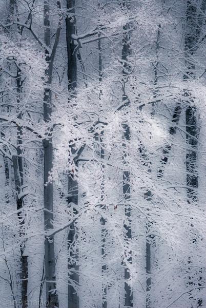 Winter Wonderland in Vermont-15.jpg