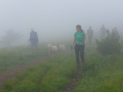 Roan Mountain, June 2014