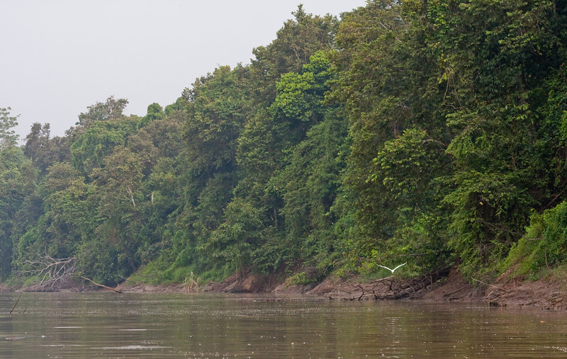 Sungai Kinabatangan Wildlife Sanctuary