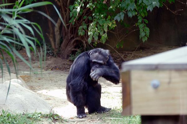 Chattanooga Zoo September 2020