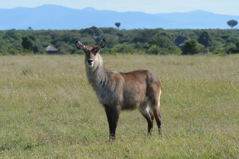 East Africa Safari 44.jpg