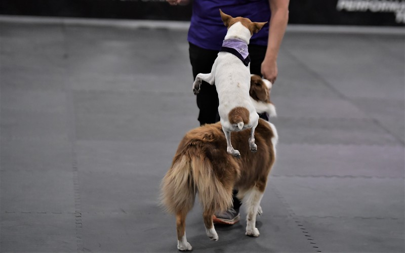 dogshow12.jpg