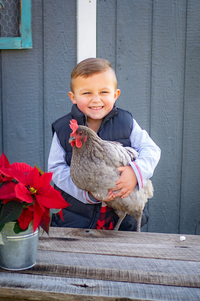 2020-12-05 Christmas Chickens