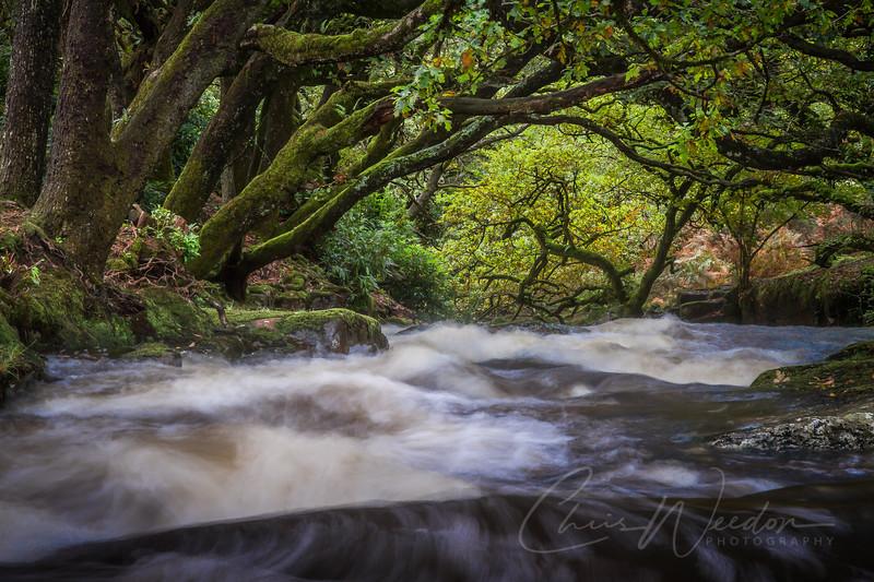 river avon-24.jpg