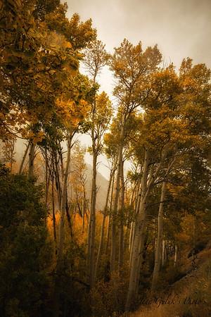 Fall in the High Sierras- 10/14/2016
