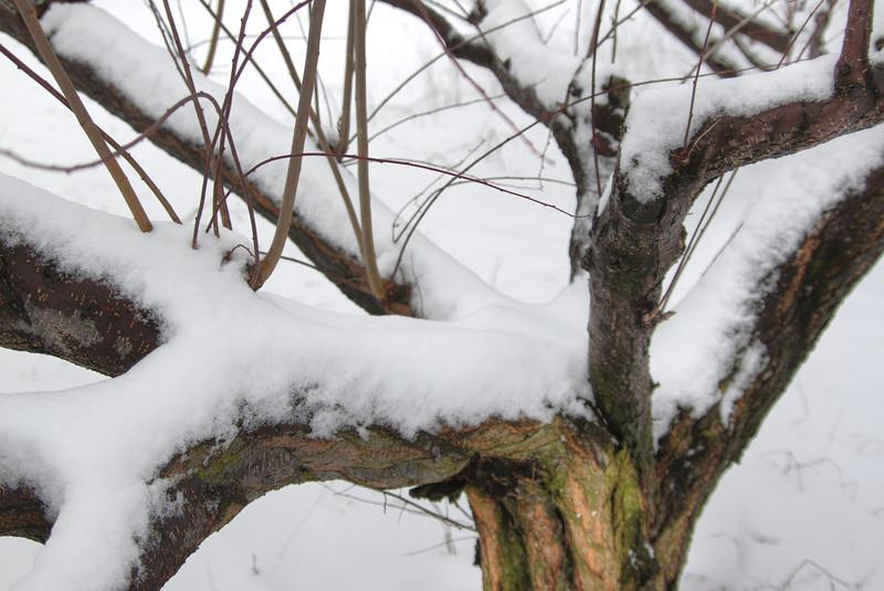 Easy Pickins Winter 024-1676780330-O.jpg