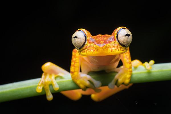 Frogs in Ecuador
